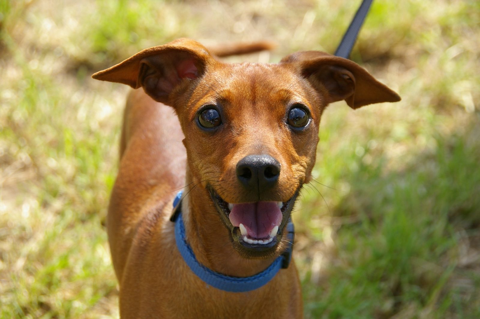 animal-portrait-dog-curious-awakened-60913